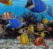 3D Fish School Screensaver 4.91