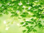 Green Leaves cho Windows 7