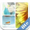 Easy Collage Lite for iOS