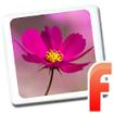 Hoa cỏ mùa Xuân for Android