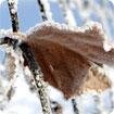 Winter Garden theme