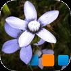 iExplorer for Picasa cho iOS
