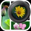 PicFrameCam cho iOS