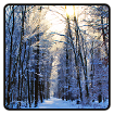 Winter Wallpaper cho Android