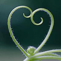 Natural Hearts Premium